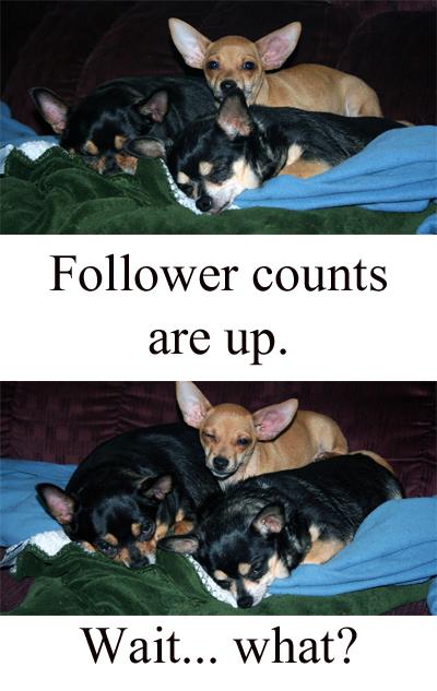 Vanity Pups