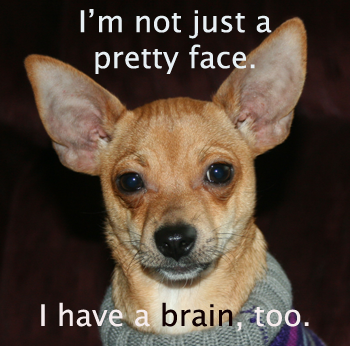 I'm not just a pretty face. I have a brain, too.