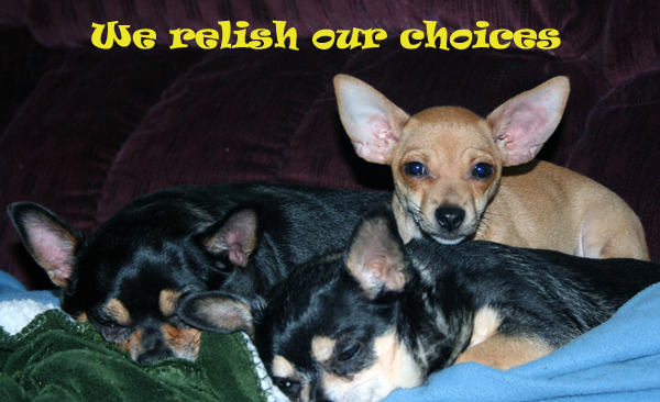 We relish our choices