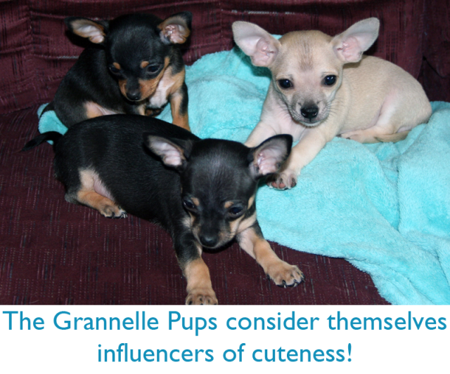 The Grannelle Pups consider themselves influencers of cuteness!